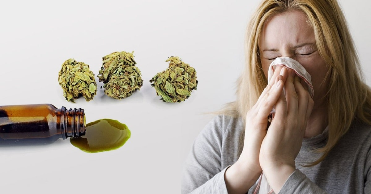 The Best CBD Oil for Allergies