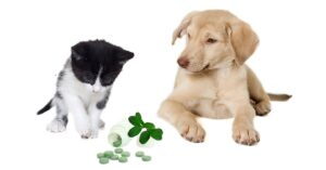 Using topical CBD products for cats anddogs-min